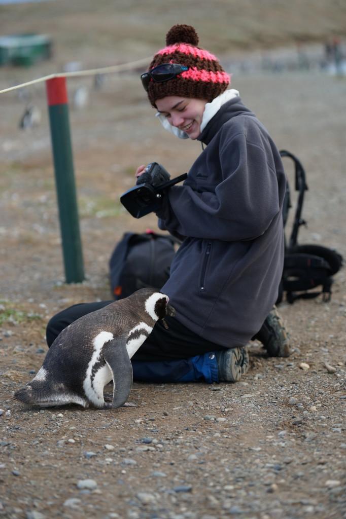 Pinguin_1